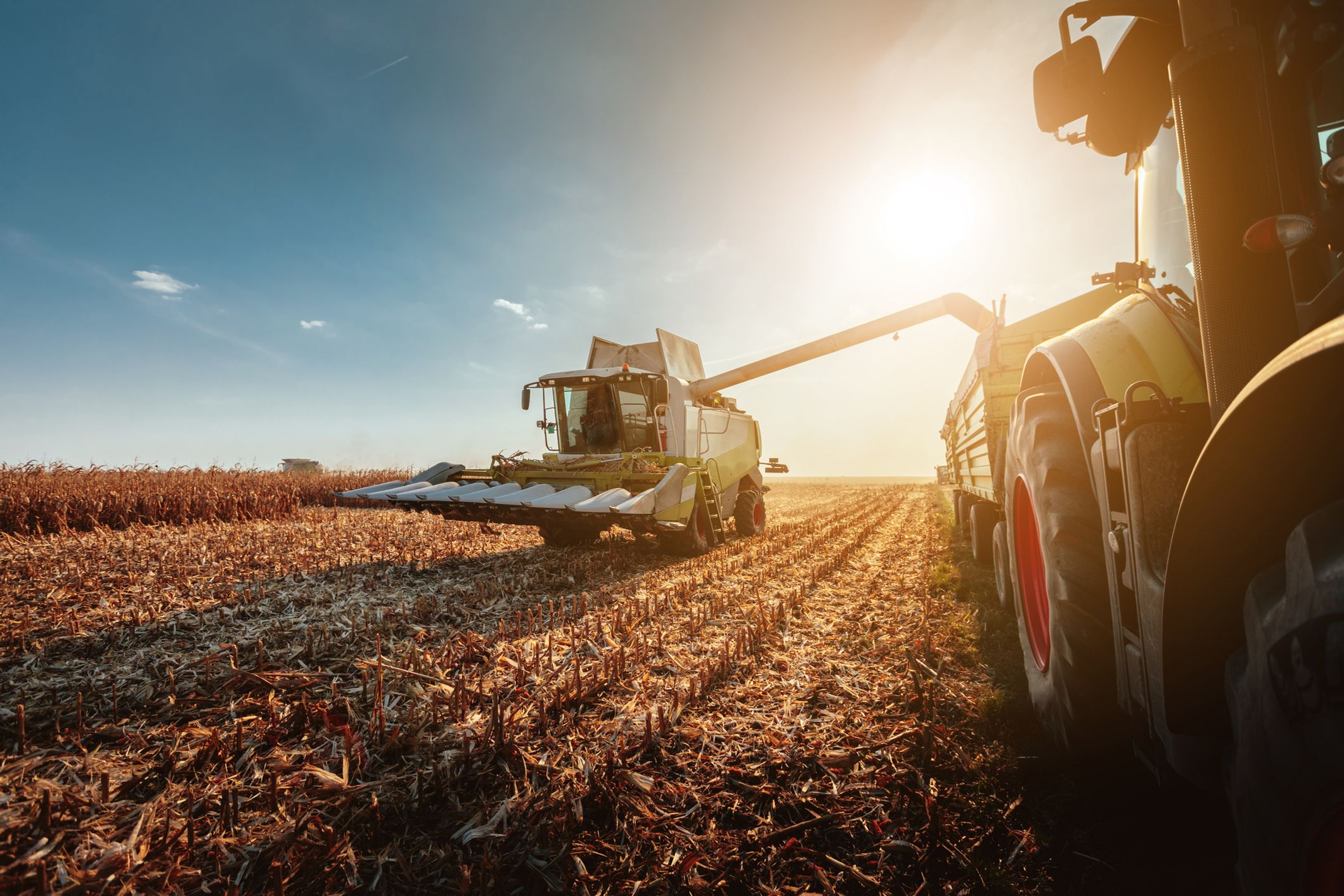 Why Employment Contracts are so important for farming businesses