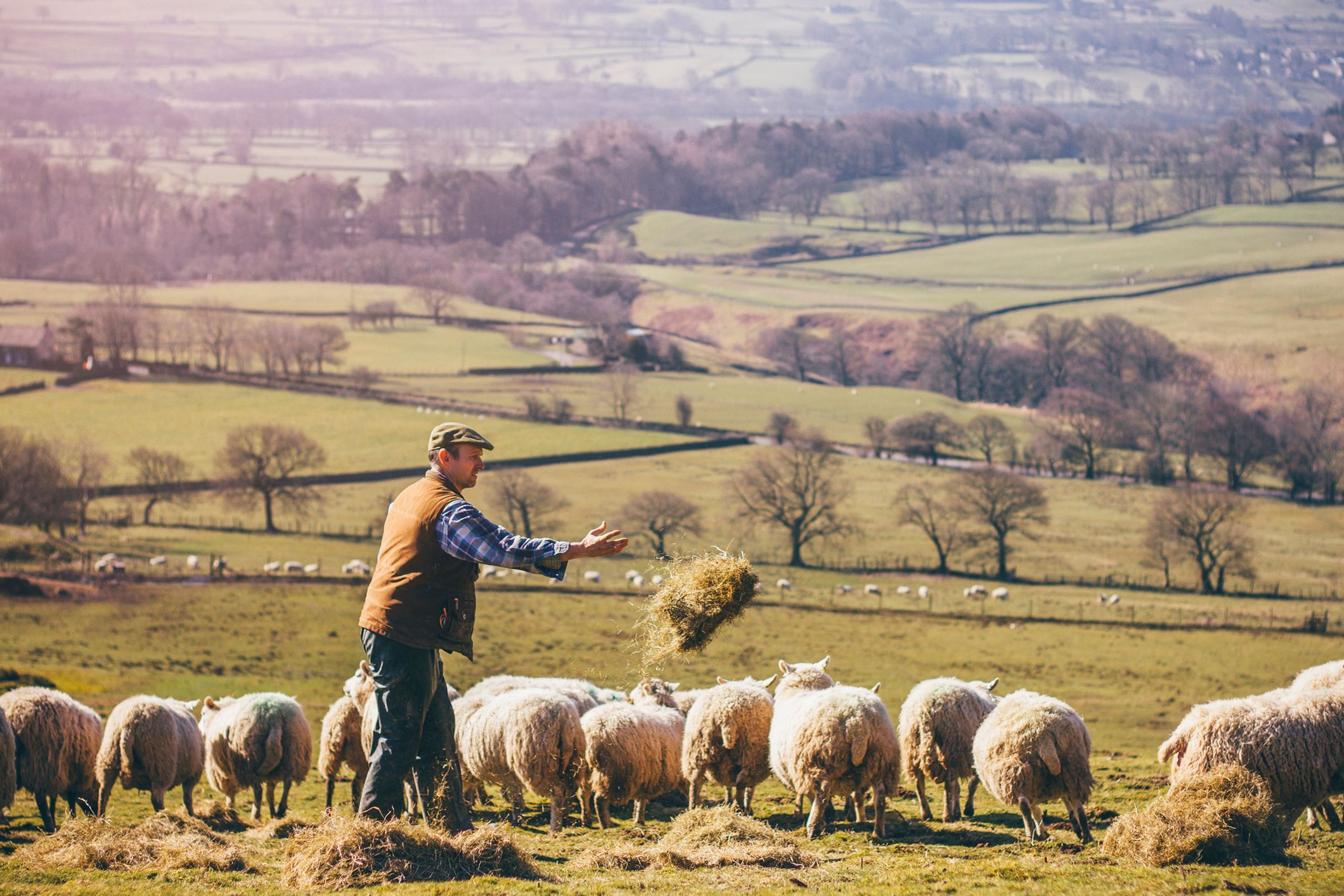 Rural Protect Elements: Frequently Asked Questions